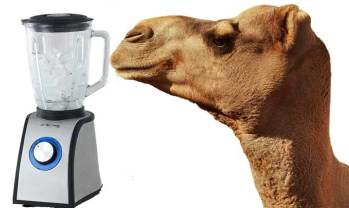 Rich man uses blender to solve camel conundrum