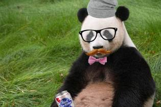 "Pandas: ""We were social distancing before it was cool."" Hipsters rejoice"
