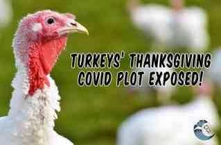 Turkey's thanksgiving COVID plot exposed!