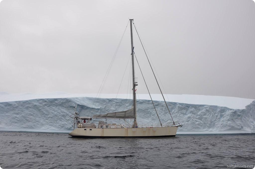 SV Salty icebergs Newfoundland
