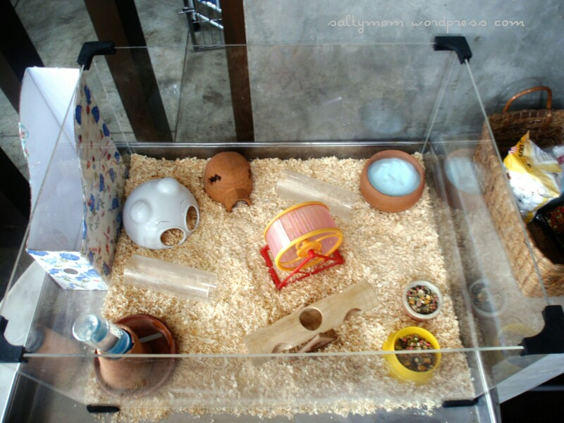 diy hamster cage deluxe