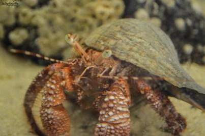ELC aquariums (4)