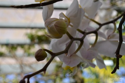 orchids NBG (2)