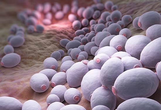 Bacterias-candida-albicans