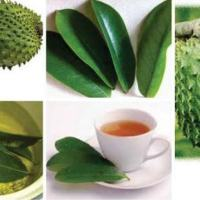 Nutricion Guanabana