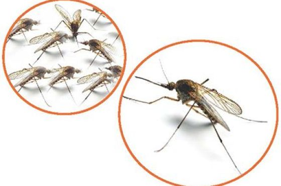 Mosquito Bite Prevention