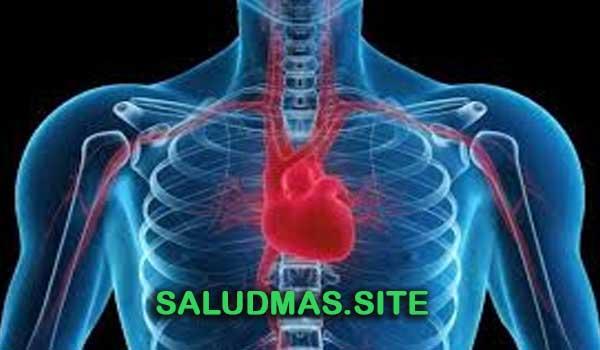 Enfermedades Cardiovasculares Más Comunes