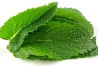 Beneficios para la salud de hojas de menta