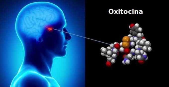 Función de la Oxitocina