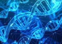 Vitamina B12 relación con ADN