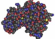 ampk beneficios propiedades efectos negativos