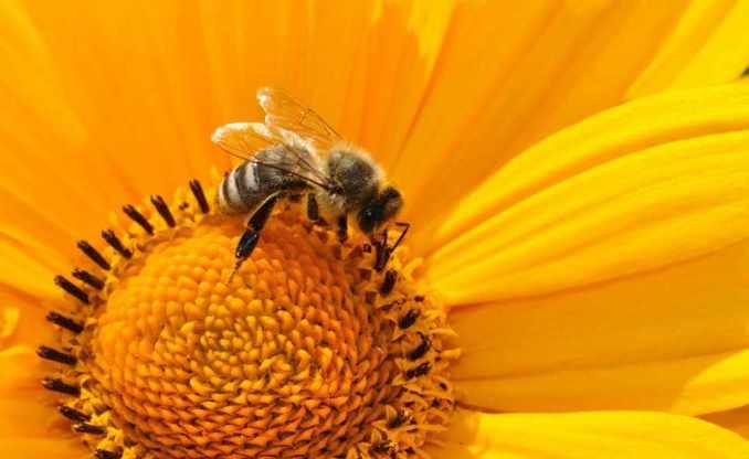 Beneficios y efectos de la apiterapia