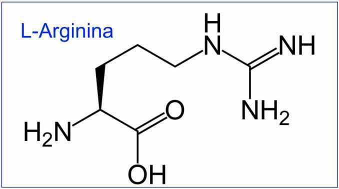 Beneficios y uso de la L-Arginina