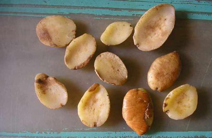 Beneficios y propiedades del Mango Africano