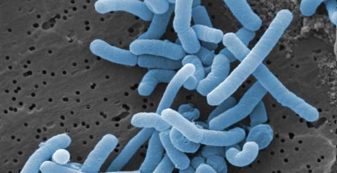 Beneficios para la salud del Lactobacillus paracasei