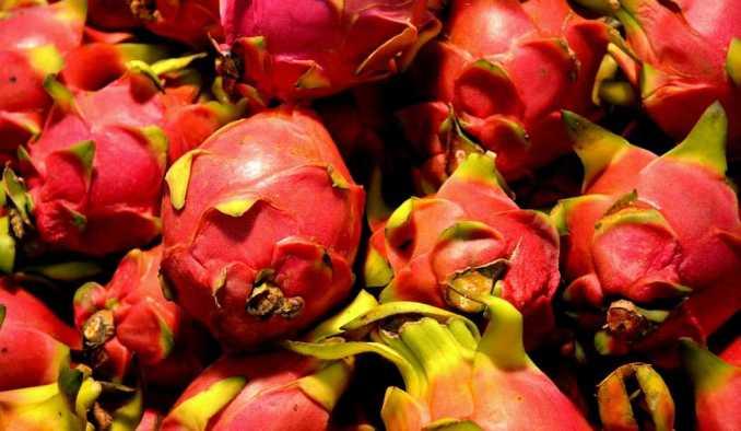 Pitahaya: beneficios y efectos secundarios Sabor de la pitahaya