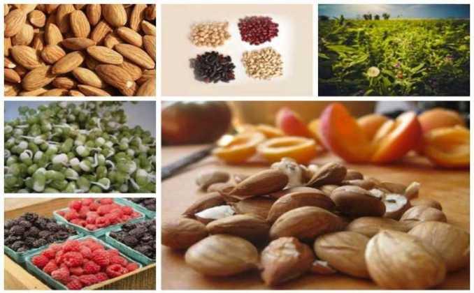 Alimentos con Vitamina B17
