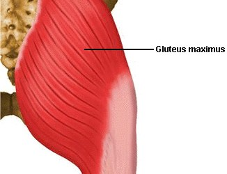 Muscle Monday – Gluteus Maximus