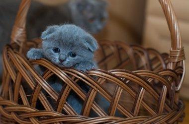 Продажа животных частными лицами будет запрещена во Франции.