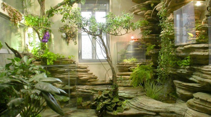 Le piante che in casa purificano laria e migliorano la vita