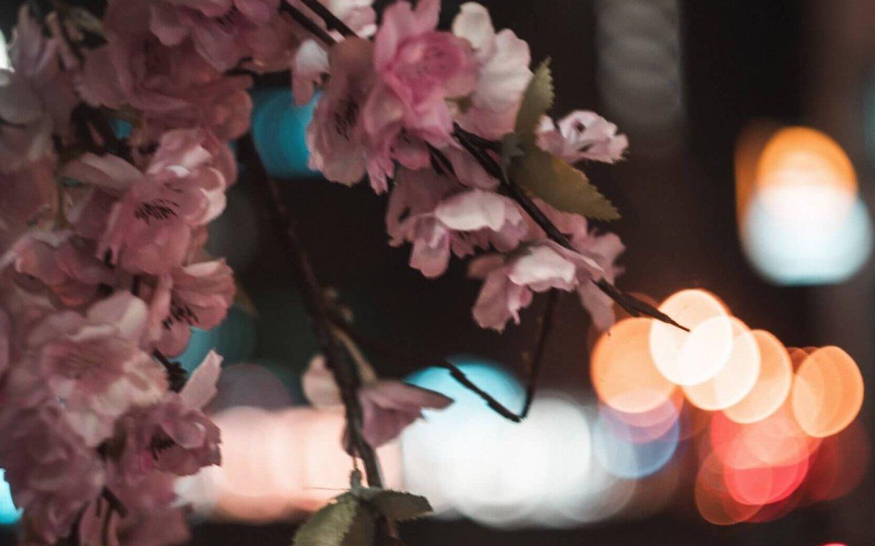 は 桜の あい 夜 みょん 降る