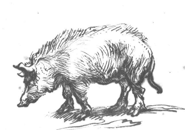 rembrandt-study-of-a-pig