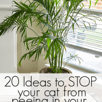How to Get your Cat to Stop Peeing in Your House Plants