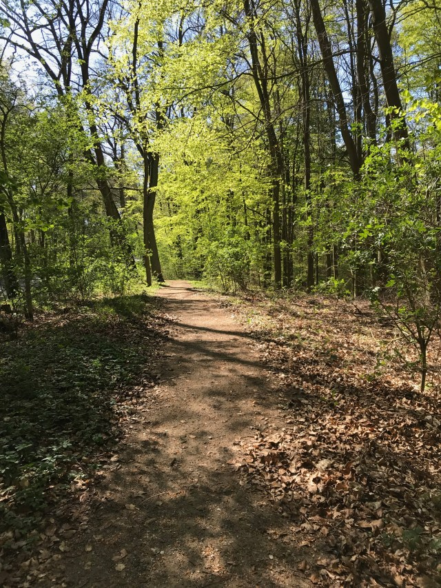 A picture of a bike path in the woods.