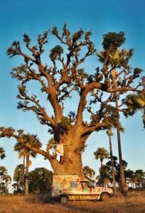 Le baobab de mon souvenir, en décembre 2003