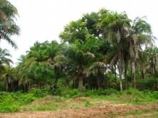 Verte Casamance...