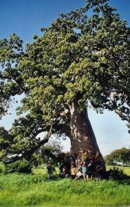 baobab-toubabs-02