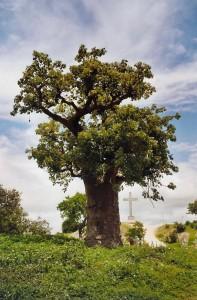Baobab dans le cimetière de Fadiouth