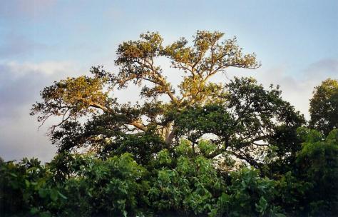 missirah-lever-soleil-brousse-02