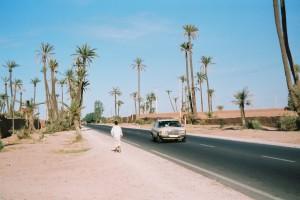 En passant par la palmeraie de Marrakech...