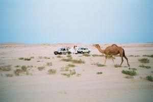 Titine et un dromadaire dans le désert mauritanien