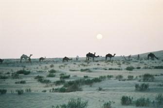mr2002-10-dromadaires-sunrise