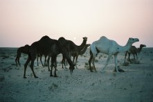 Rencontre matinale dans le désert...