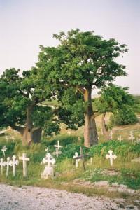 Baobabs dans le cimetière de Fadiouth