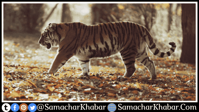 5 famous tiger reserves of India