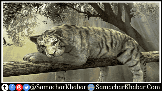 International Tiger Day 2021 Quotes slogan messages with images