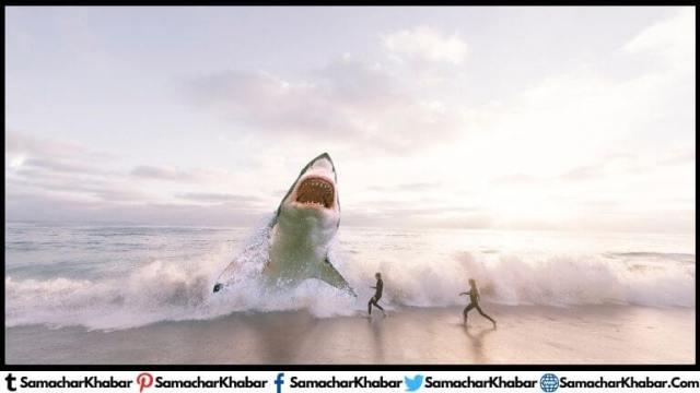 व्हेल शार्क क्या हैं