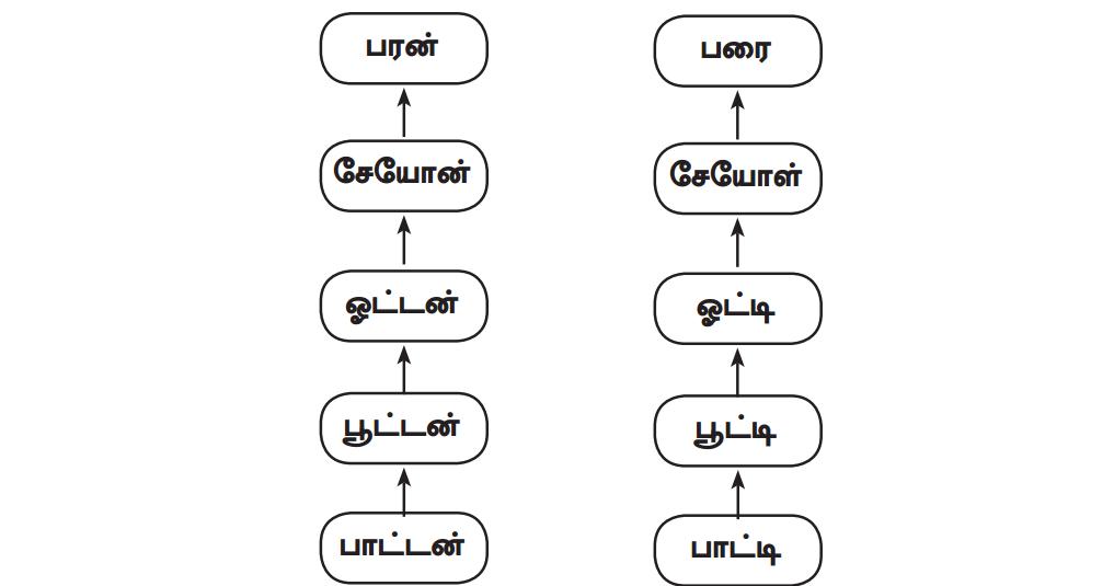 Samacheer Kalvi 12th Tamil Guide Chapter 3.1 தமிழர் குடும்ப முறை 1