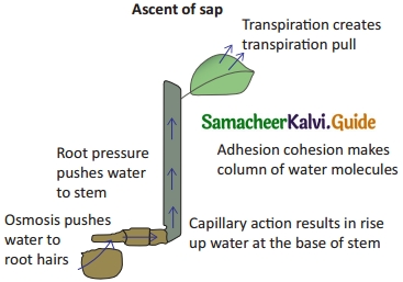 Samacheer Kalvi 10th Science Guide Chapter 14 Transportation in Plants and Circulation in Animals 9