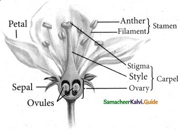 Samacheer Kalvi 5th Science Guide Term 2 Chapter 3 Plants 3