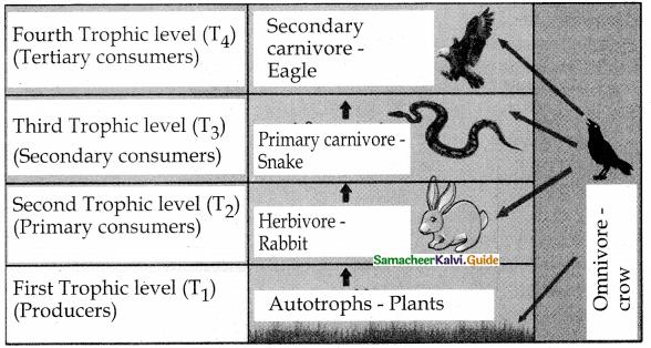 Samacheer Kalvi 12th Bio Botany Guide Chapter 7 Ecosystem 13