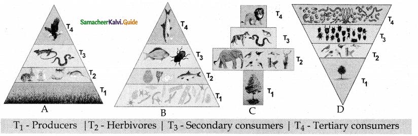 Samacheer Kalvi 12th Bio Botany Guide Chapter 7 Ecosystem 18