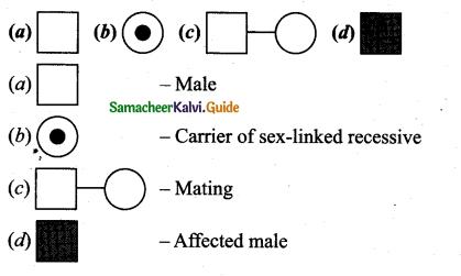 Samacheer Kalvi 12th Bio Zoology Guide Chapter 4 Principles of Inheritance and Variation 6