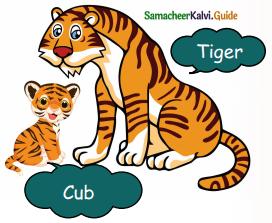 Samacheer Kalvi 5th English Guide Term 3 Prose Chapter 3 The Monster Tree 11