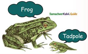 Samacheer Kalvi 5th English Guide Term 3 Prose Chapter 3 The Monster Tree 13