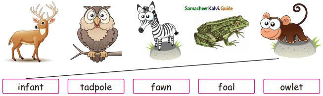 Samacheer Kalvi 5th English Guide Term 3 Prose Chapter 3 The Monster Tree 16